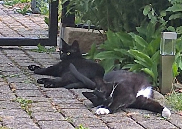 Molly und Rosina relaxen im Garten