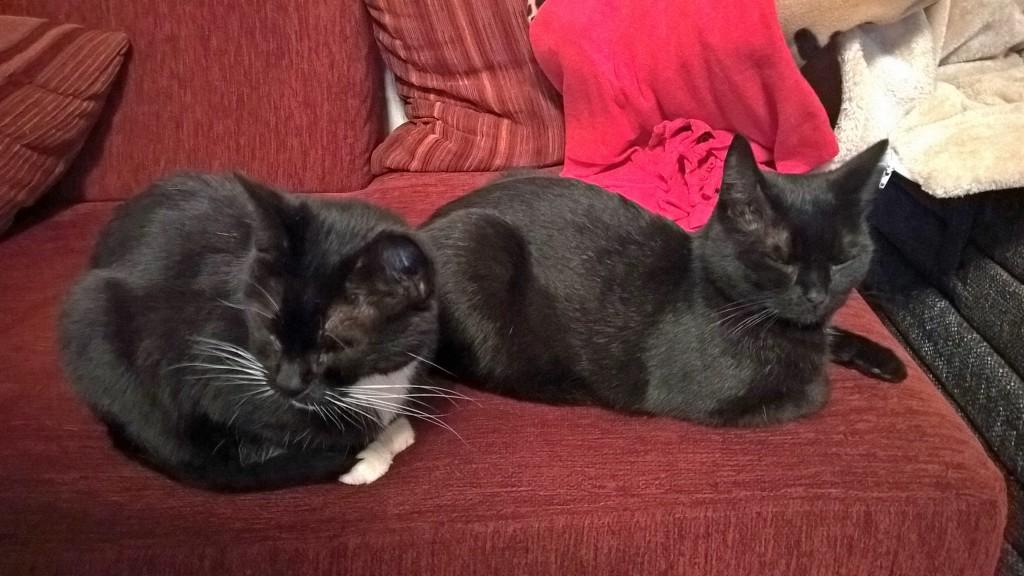 Molly und Rosina liegen auf einer Couch