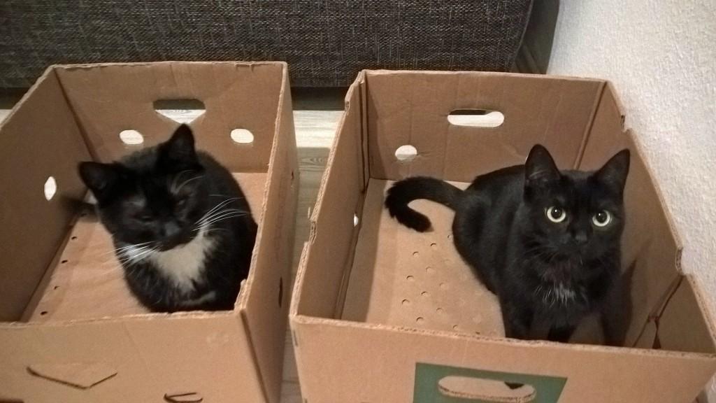 Rosina und Molly spielen in Pappkartons