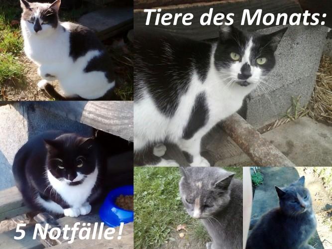 Fünf heimatlose Katzen