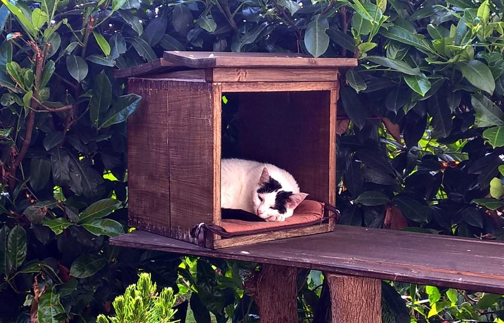 Bild: Mia in einer Holzbox, schlafend
