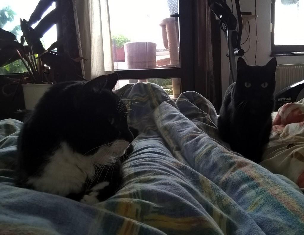 Bild: Die Katzen Lisa und Molly auf einem Bett.