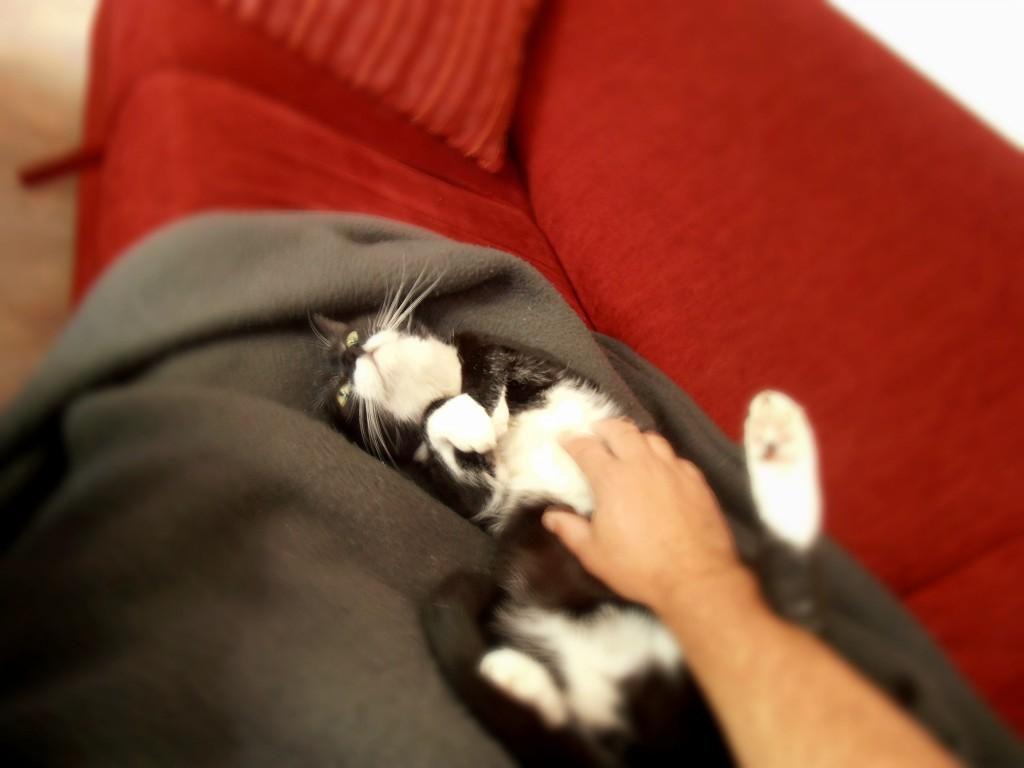 Katze Lisa liegt auf einer Couch und lässt sich kraulen.