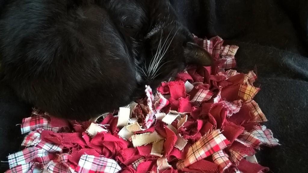 Rosina Samtpfote vergräbt ihr Gesicht in der Fummelmatte.