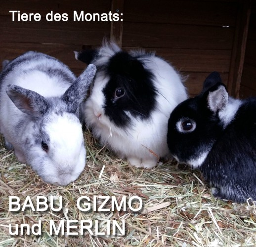 drei Kaninchen