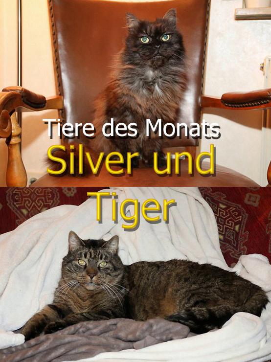 Silver und Tiger