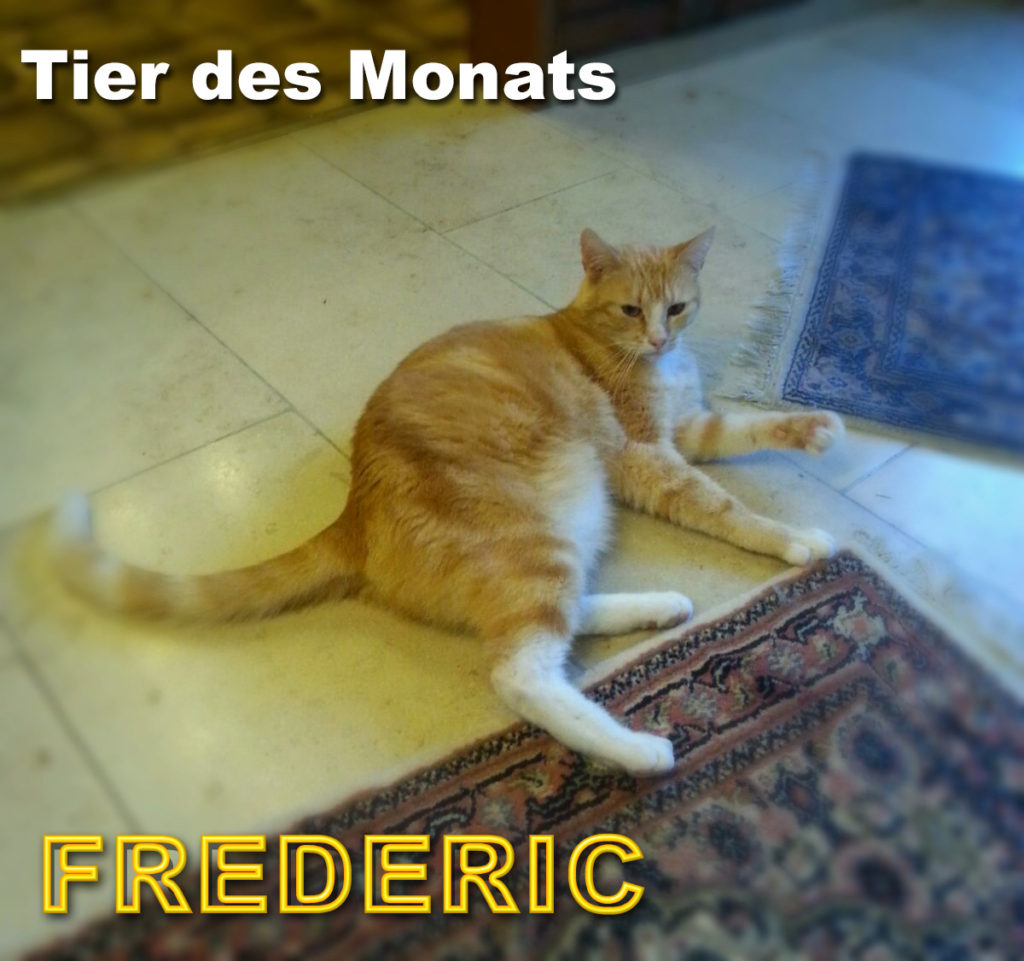 Kater FREDERIC