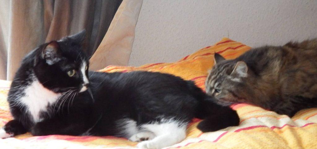 Eine weiche Kuscheldecke und Katzengesellschaft, hier lässt es sich aushalten!