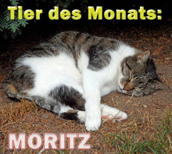 Kater Moritz