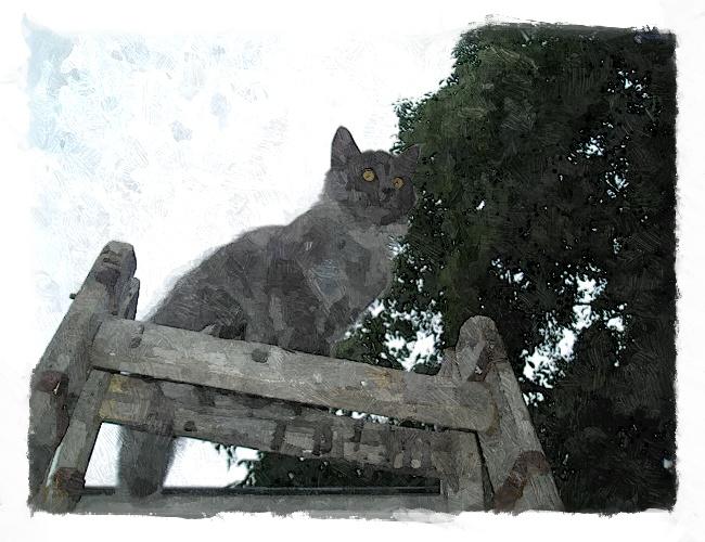 katze,-leiter,-himmel-144857_FotoSketcher