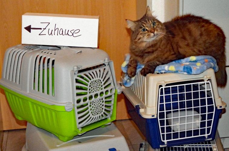 Abb:. Katze auf Katzentransportbox