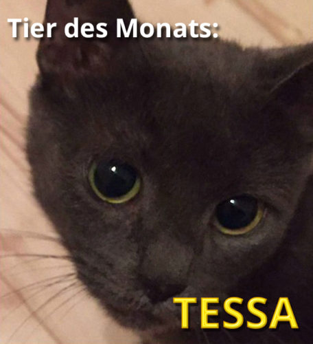 Abb.: Tier des Monats TESSA
