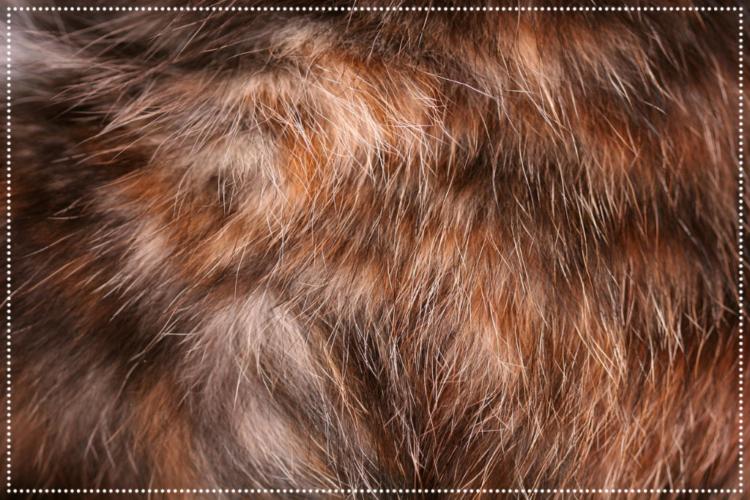 Abbildung: Katzenfell