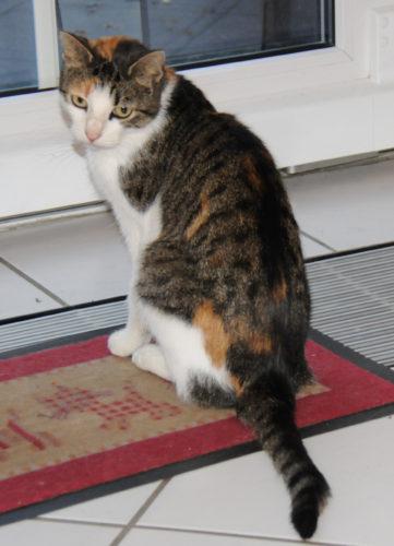 Trixi allein vor der Tür