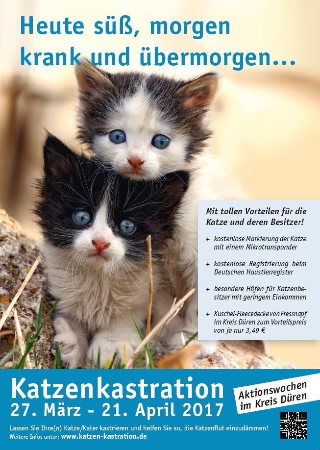 Poster für das Katzenkastrationsprojekt