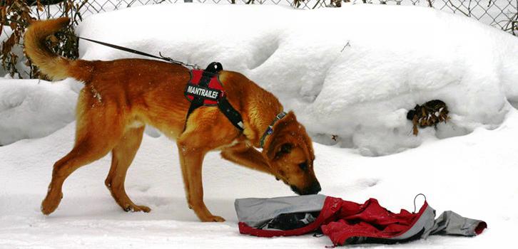 Suchhund im Einsatz