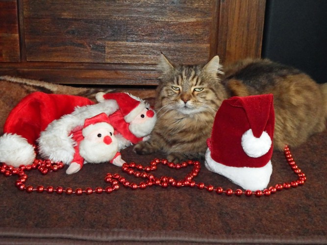Katze in Weihnachtsdekoration