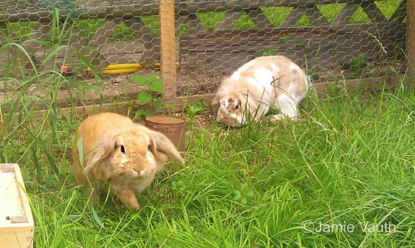 Zwei Kaninchen in einem artgerechten Gehege.