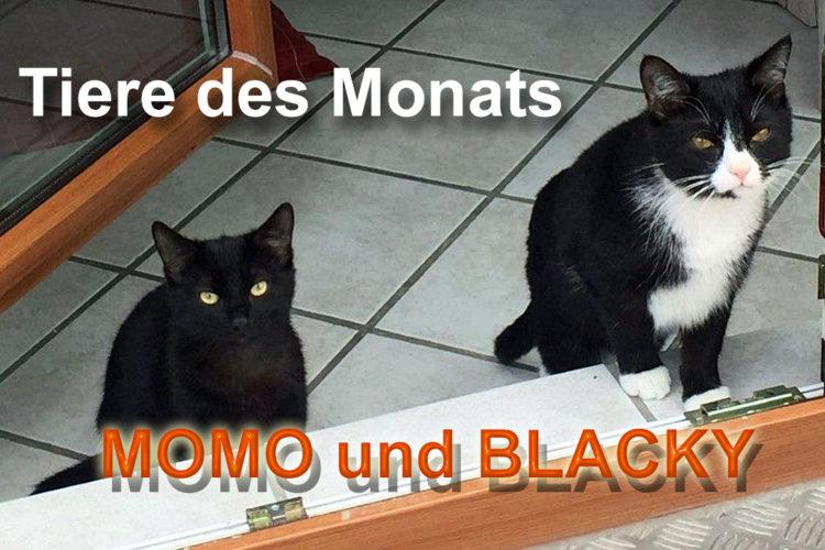 MOMO und BLACKY