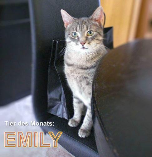Bild von EMILY