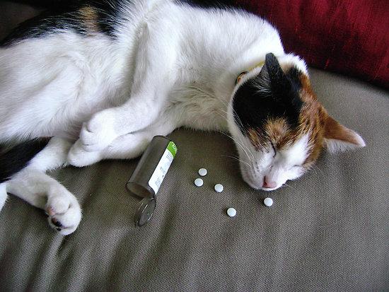 vergiftete Katze (nachgestellt)