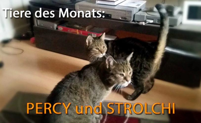 Percy und Strolchi
