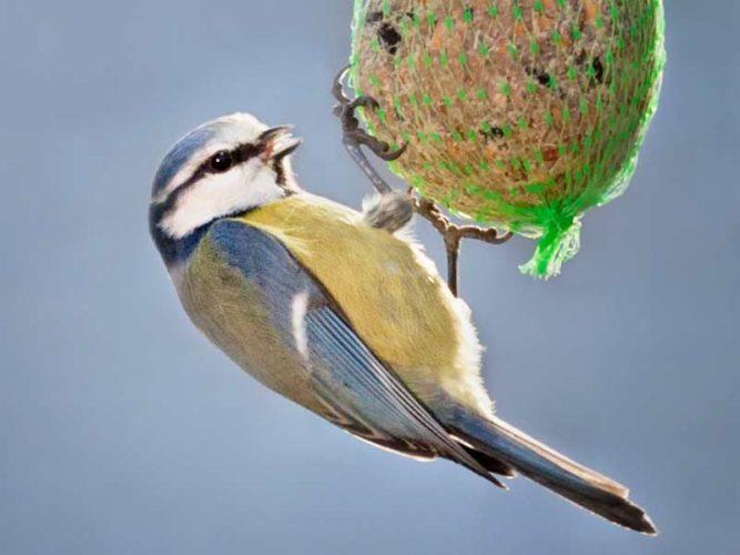 Das Für und Wider bei der Vogelfütterung