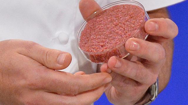 Hackfleisch in einer Petrischale