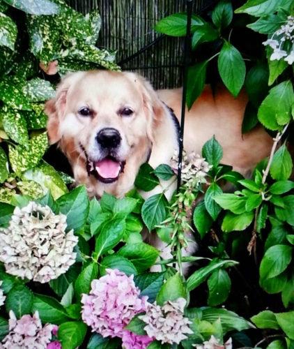 Hund in Blumenbeet